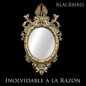 Blackbird Mx Artist photo
