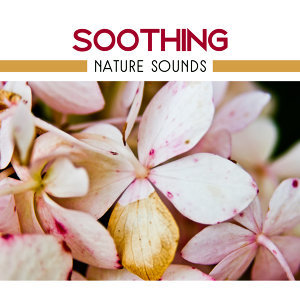 Relaxing Music Therapy, Nature Sound Collection Artist photo