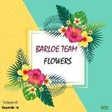 Barloe Team