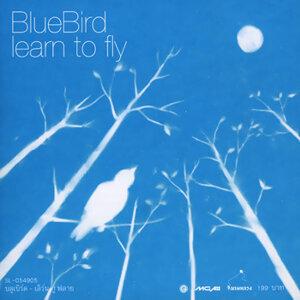 บลู เบิร์ด (BlueBird) 歌手頭像
