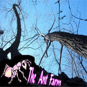 THE ANT FARM 歌手頭像