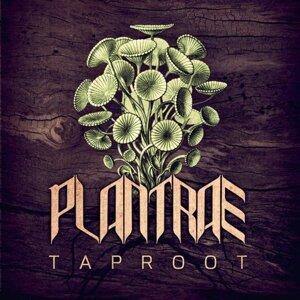 Plantrae