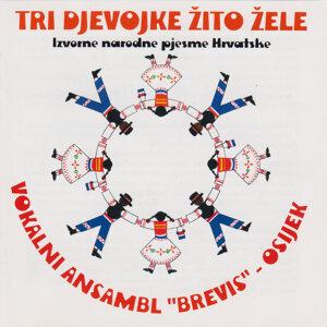 Vokalni ansambl ¨Brevis¨ - Osijek 歌手頭像