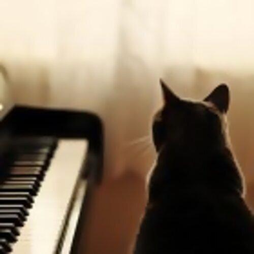 純音樂 - 巴莎節奏音韻 (Bossa) - I