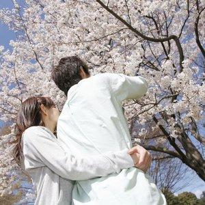 來跟櫻花妹在樹下約會吧