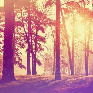 林間的精靈