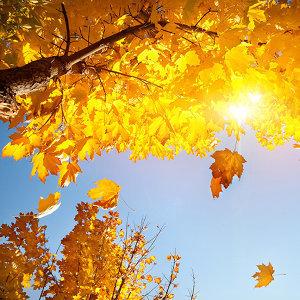 秋天的淡淡憂愁