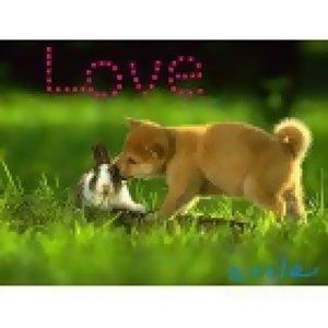 *~當愛已逝~*