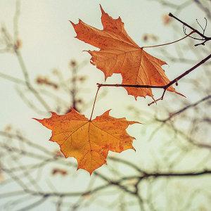 秋天特別容易感傷