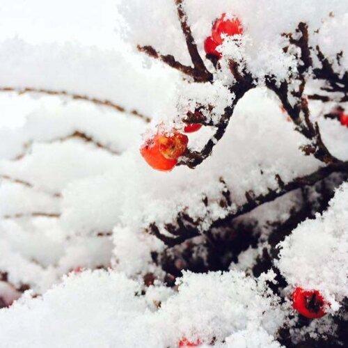 冬天好想去賞雪