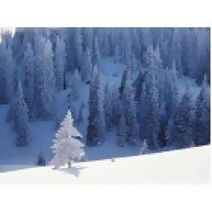 ☆~雪~☆