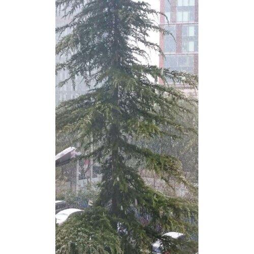 天啊!超強寒流要來惹~聽說要下雪?