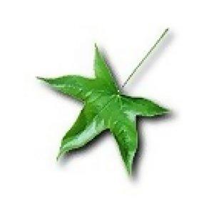 ~Leaf~