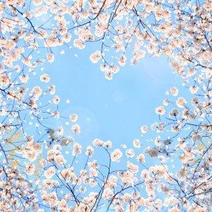 愛在春暖花開時