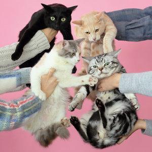 究極の猫ジャケ写 160選