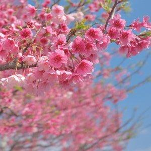 櫻花樹下的電音