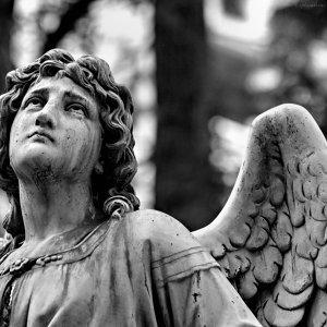 在古典中聽見平安與祈禱