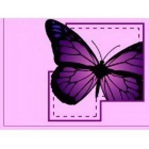 蝴 蝶 物 語