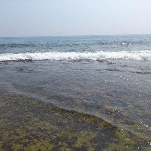 ♬♪海洋喔嗨央♪♬#世界海洋日
