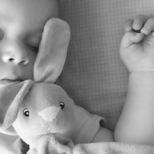 毛小孩睡前聽這些助好眠