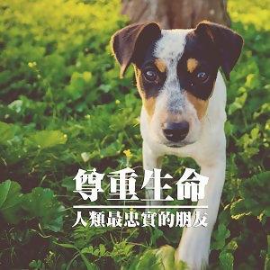 狗是人類最忠實的朋友