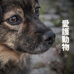愛護動物很難嗎?