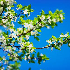 鄉村不插電:來場春日的輕旅行
