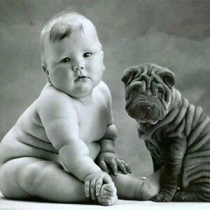 為什麼你寄豬來了 有種悲傷感''油''然而生#胖胖也可愛啦