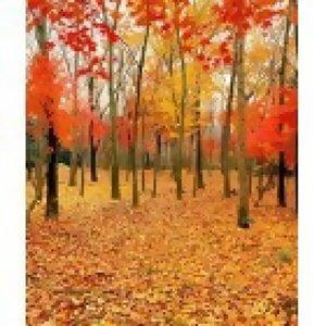 秋天的愛情下集~~