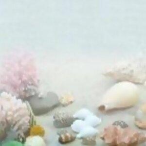 貝殼的秘密