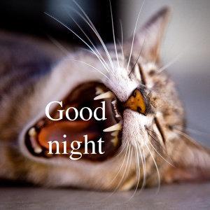飛樂大西洋-讓我們互道一聲晚安