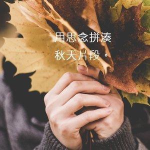 用思念拼湊秋天片段