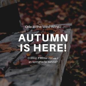🍁天涼好個秋🍁autumn chill~
