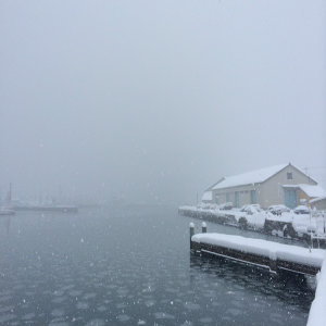 想去北海道看雪,看企鵝散步,看破冰船!