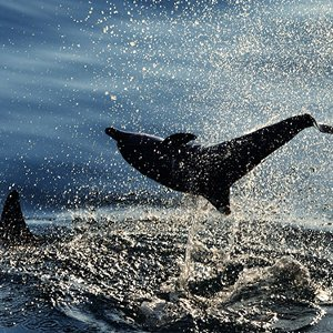 說到海洋你哼起什麼旋律?