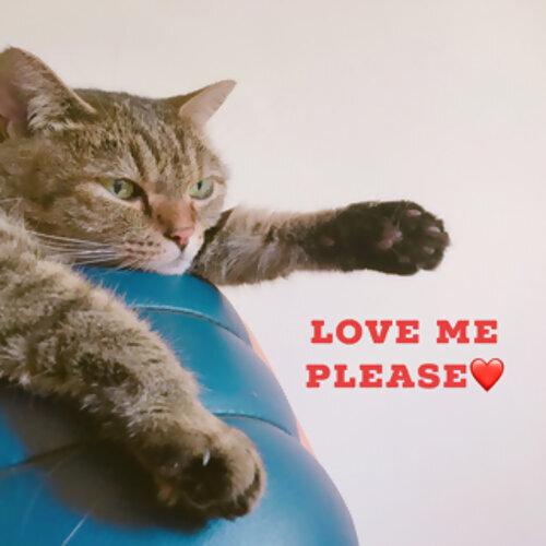 #26 Love me,please❤️ (20 songs of feeling love)