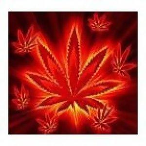 藥物專輯(四)-大麻(下)