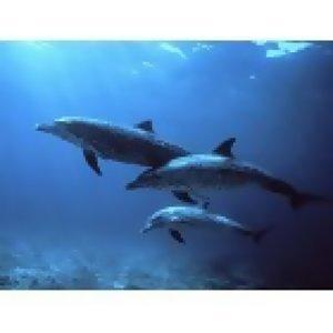 海豚音的真與假