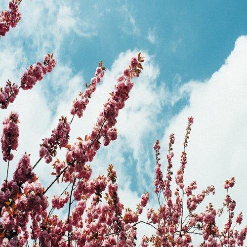 愛到春天 苦的酸的都甜美