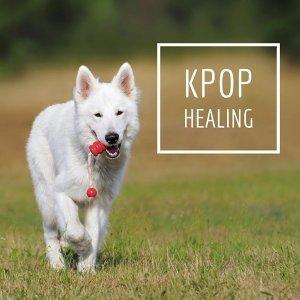 散步遛狗專屬~這韓樂太療癒