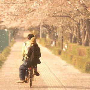 與你的一百種櫻花樹下的爛漫