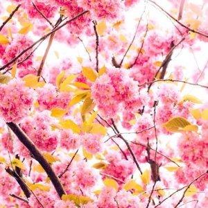 春和日暖一起出去玩