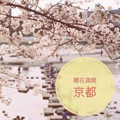 和你去京都看櫻花滿開