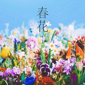 春季限定:賞花必備歌單
