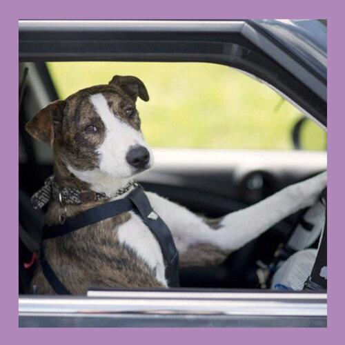行車請注意安全,兜風輕傾聽