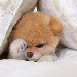 晚安!跟著音樂一起靜下心來吧!