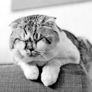 慵懶・午眠