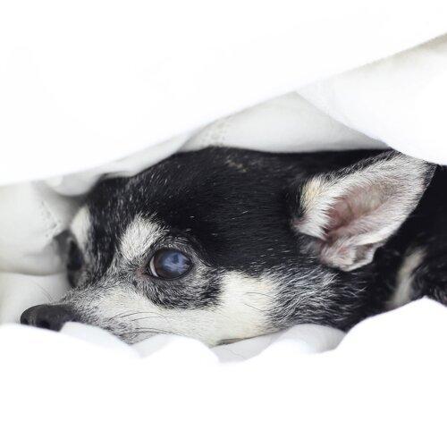 被子外面很危險!窩在床上輕輕聽