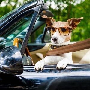 開車上路囉🚗 旅行的BGM就聽這些歌!