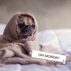是星期一  Orz